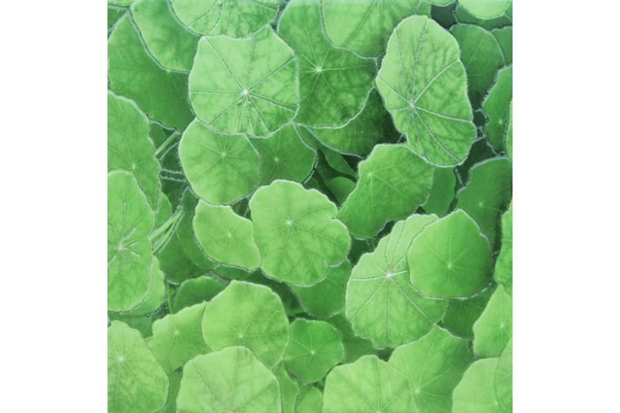 Купить Lotus Estanque Viejo Verde 30 X 30