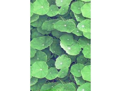 Настенная плитка  LOTUS Verde 30x45