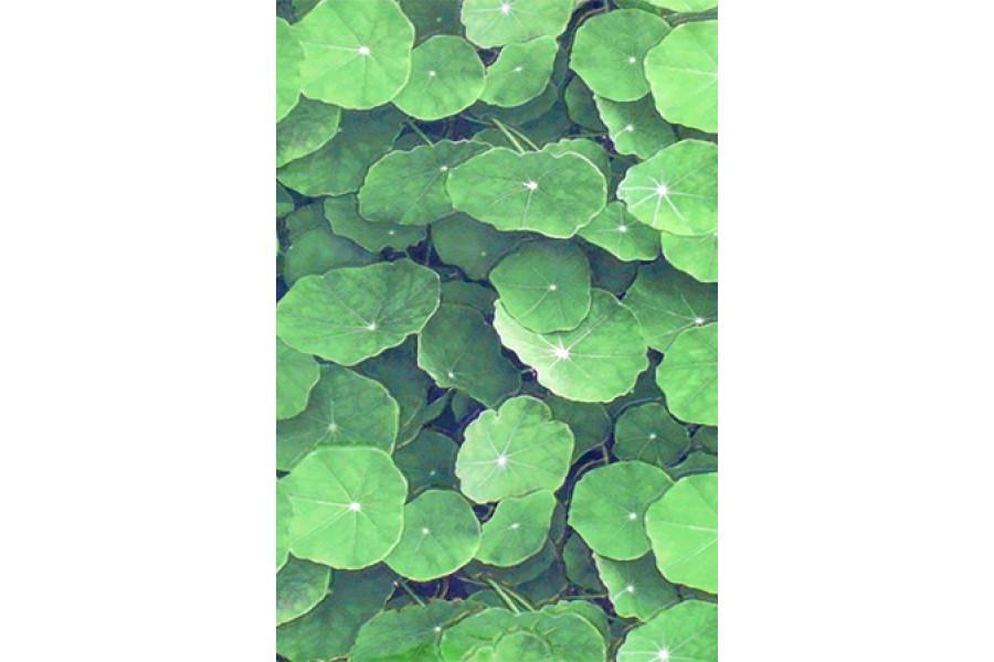 Купить Настенная Плитка  Lotus Verde 30X45